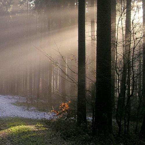 Bild zum Weblog Und Frieden auf Erden ... !?