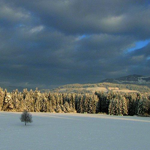 Bild zum Weblog Frohe Weihnachten