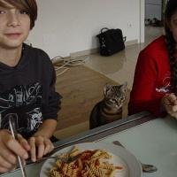 Bild zum Weblog Bezirks-Teenietreffen in Gars am Kamp