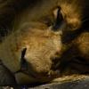 Bild zum Weblog Ausflug zum Tierpark Stadt Haag