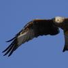 """Bild zum Weblog """"... auf Adlersflügeln getragen"""""""